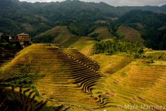 China, Guilin, Rice Terraces