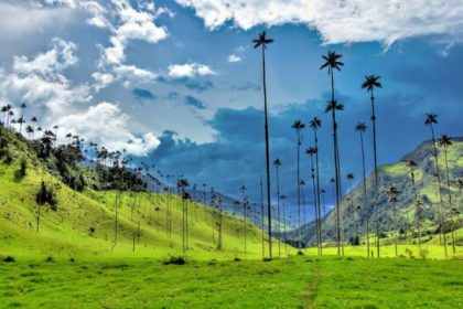 Colombia, Palma de cera